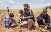 Daud (40) und fünf seiner Söhne auf dem neuen Feld.